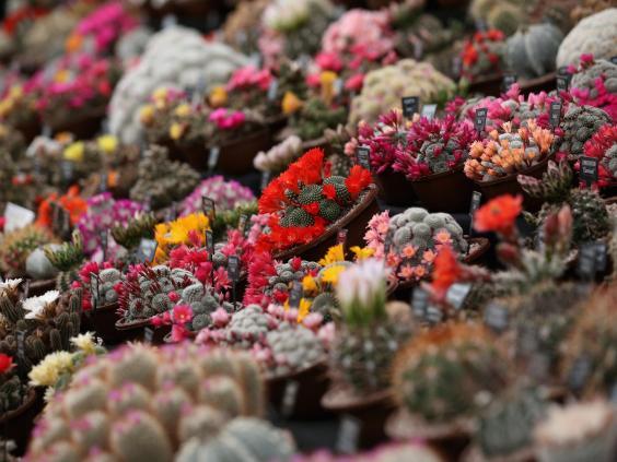 Cacti--Getty.jpg