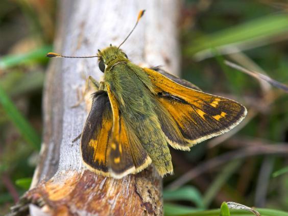 web-butterflies-3-alamy.jpg
