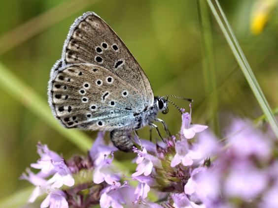 web-butterflies-4-pa.jpg