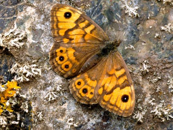 web-butterflies-5-alamy.jpg