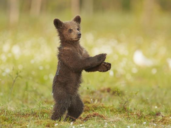 gangnam-bear-3.jpg