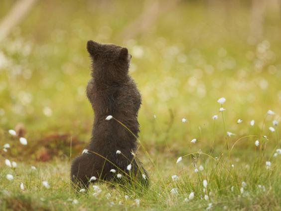 gangnam-bear-4.jpg