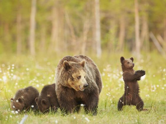 gangnam-bear-5.jpg
