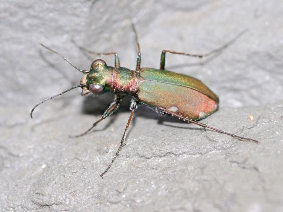 15-beetle-alamy.jpg