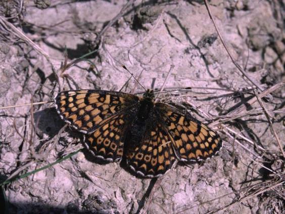 15-butterfly-PA.jpg