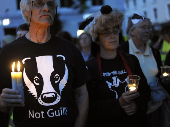 badger-cull-3.jpg