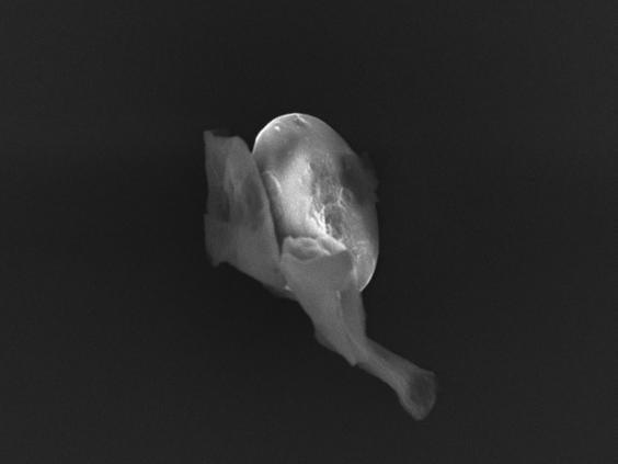 alien-life-3.jpg