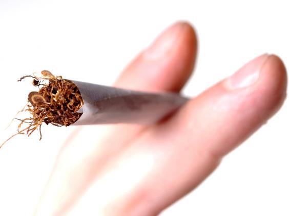 web-tobacco-rex.jpg