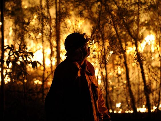 sydney-bushfire-5.jpg