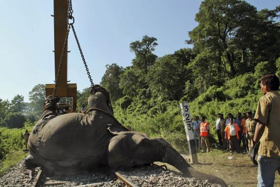 elephant-india-2.jpg