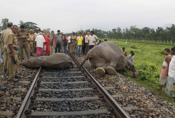 elephant-india.jpg