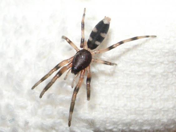 white-spider.jpg