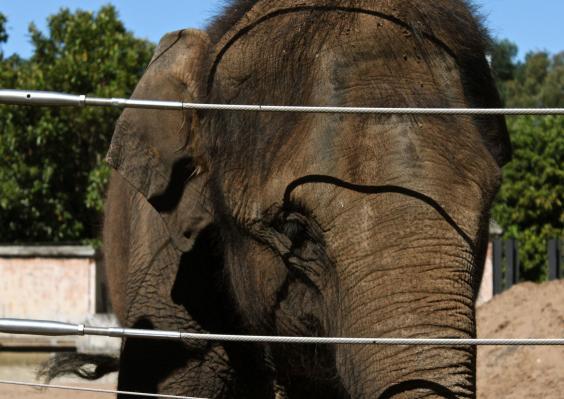 elephantswire.jpg