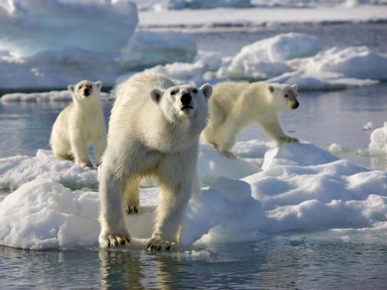 polar-bear-ap.jpg