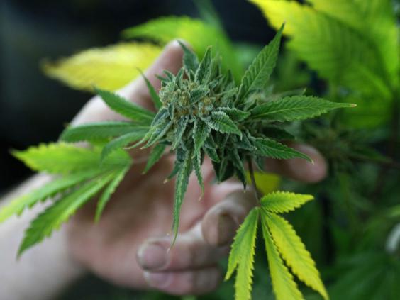 marijuana-Reuters.jpg