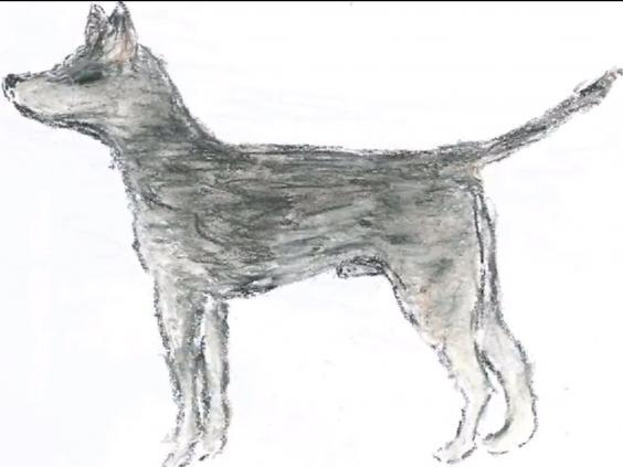 cancer-dog.jpg