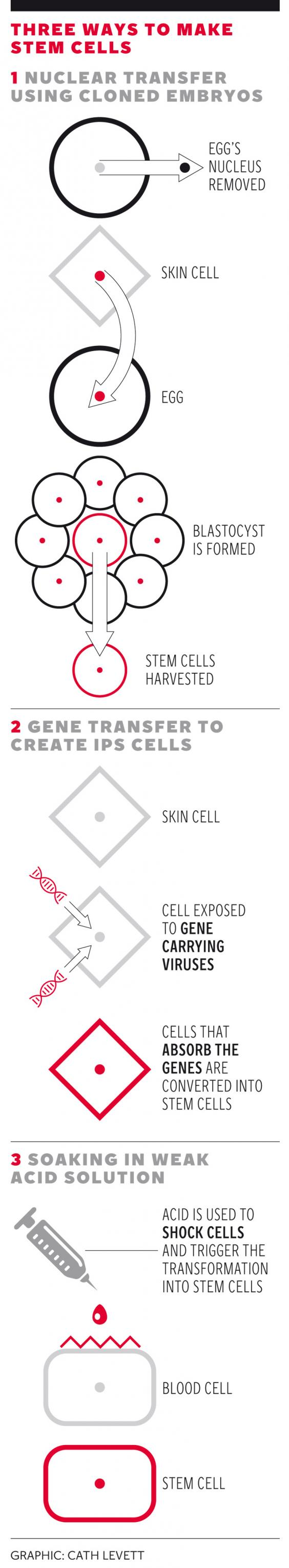web-stem-cell-graphic.jpg