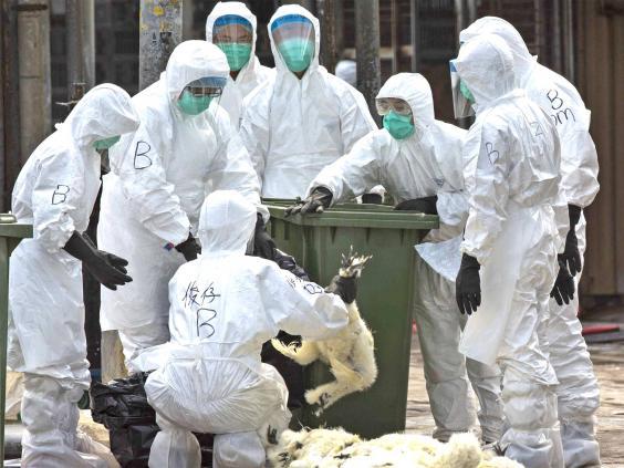 web-bird-flu-reuters.jpg
