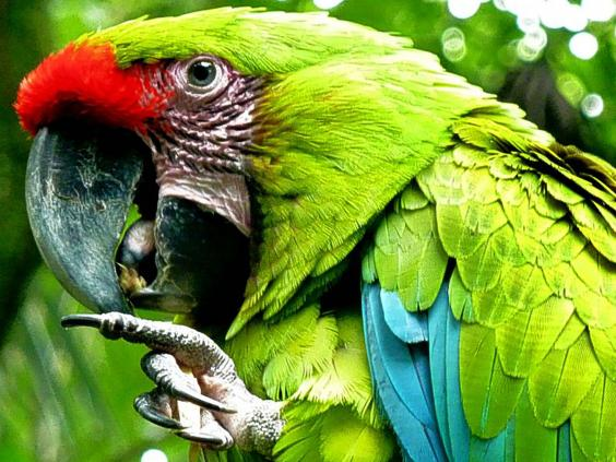 costaricaafpgetty.jpg