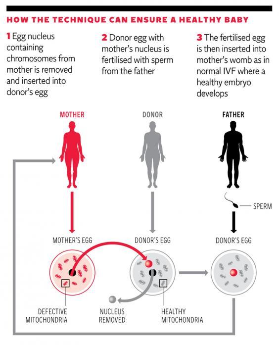 IVF-graphic.jpg