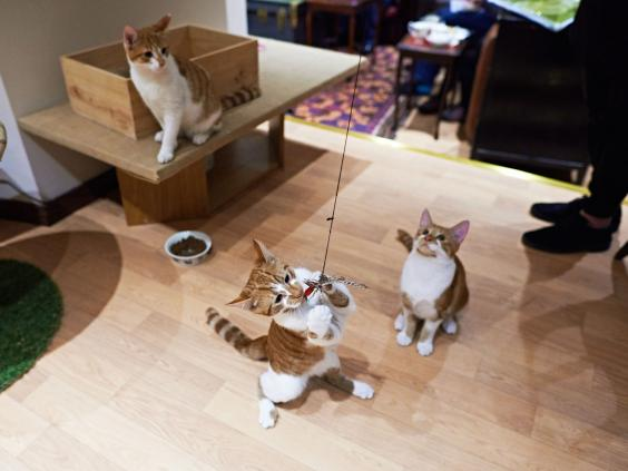 cat-cafe2-MT.jpg
