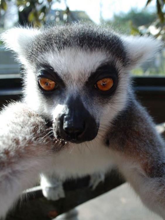 Lemur-selfie-2.jpg