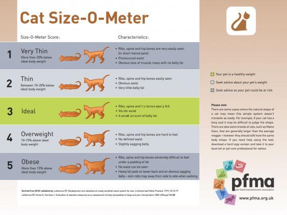 cat-size-o-meter.jpg