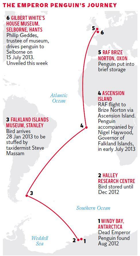 pg-31-penguins-graphic-2.jpg