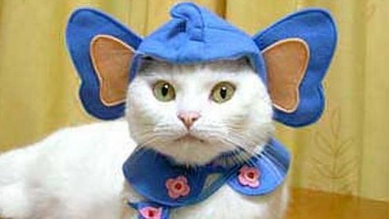 catwre.jpg