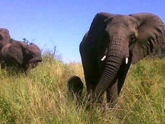 babyelephant1.jpg