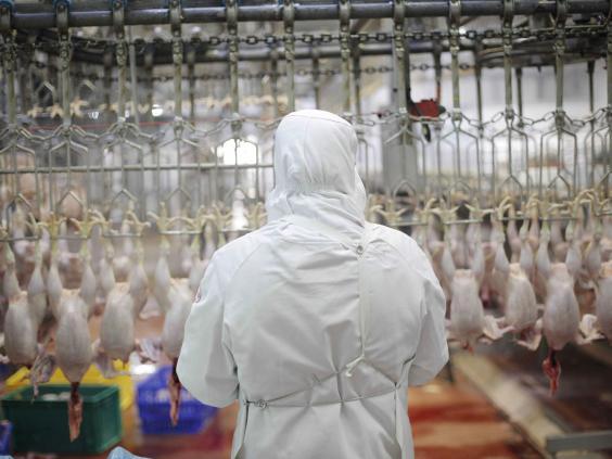 chicken-halal.jpg
