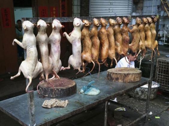 chinadog.jpg