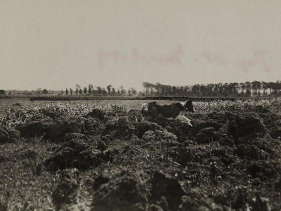 21-WW1c.jpg
