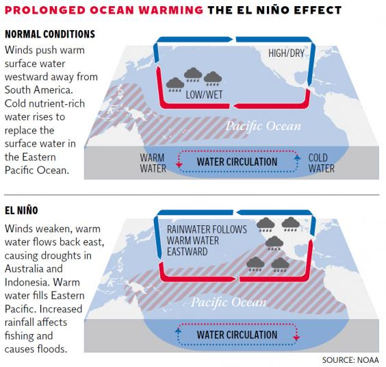 the el nino phenomenon This brief focuses on el niño–southern oscillation phenomenon and the 2015/ 2016 el niño event in particular, the environmental and societal impacts and effects of which will extend well into 2017.