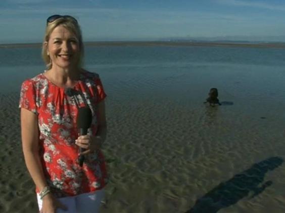 bbc-breakfast-dog-peeing.jpg