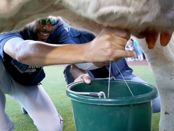 13-milking-Getty.jpg