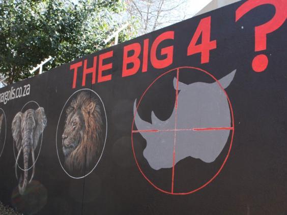 rhino-3-ap.jpg