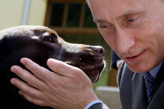 putin-dog3.jpg  - putin dog3 - Vladimir Putin's hard-core daily routine includes hours of swimming, late nights, and no alcohol