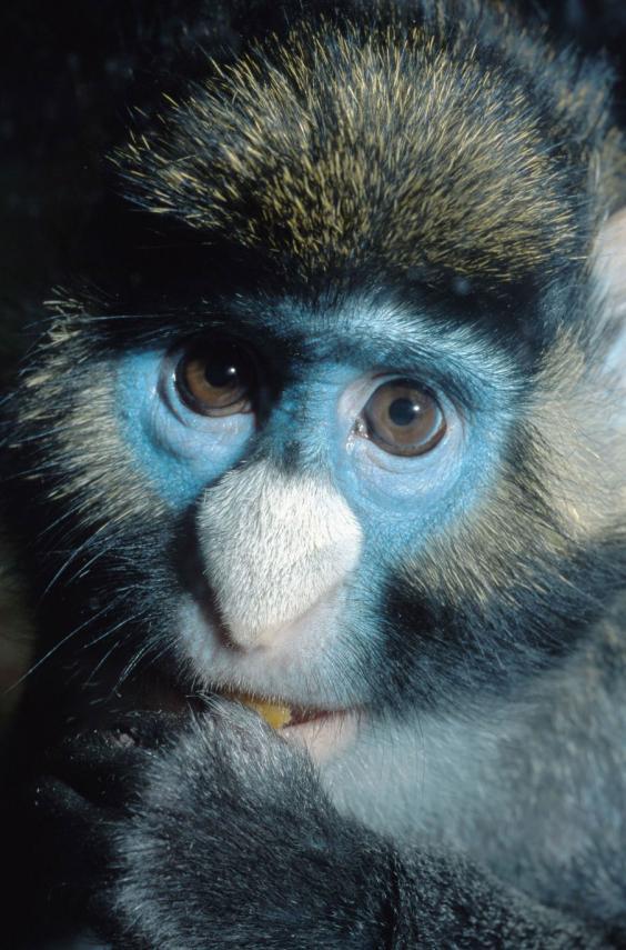 11-Monkey-Alamy.jpg