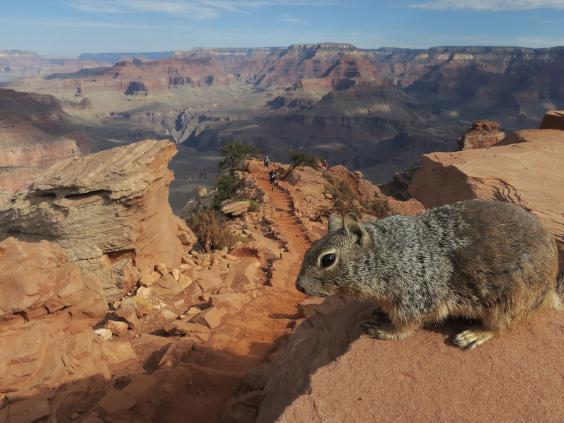 squirrel-canyon.jpg