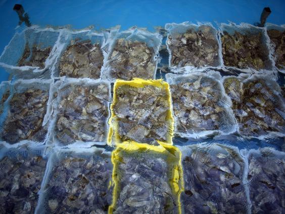 Mollusc-4.jpg