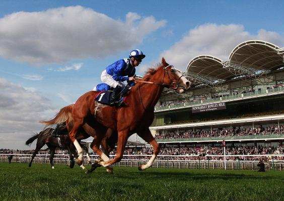 newmarket-horses.jpg