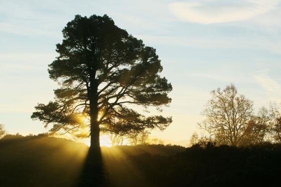 tree-scotland-travel.jpg