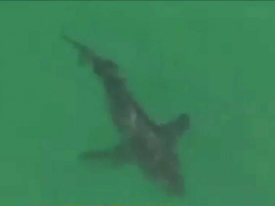 shark-video-still.jpg