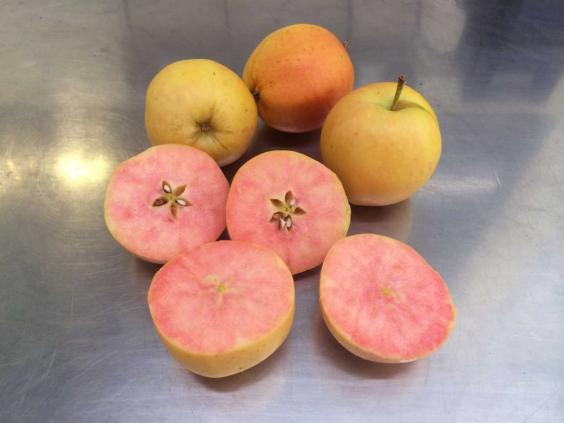 apple2-pa.jpg