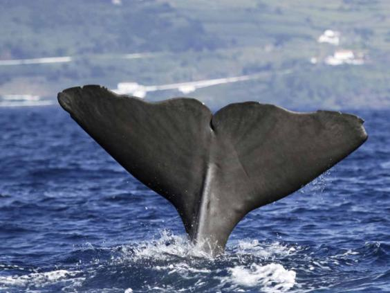 azores_whale_getty.jpg