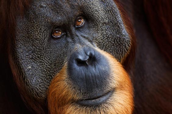 wildlife-photo-5.jpg