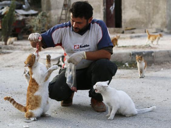 syria_cats.jpg