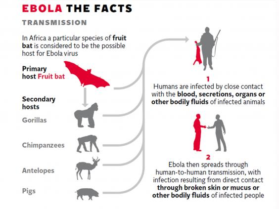 "describing the ebola virus and how it spreads ""the ebola virus hides in places where it can escape the antibodies from a body's immune system, so there is a need for vigilance,"" said dr david heymann, a professor of infectious diseases ."