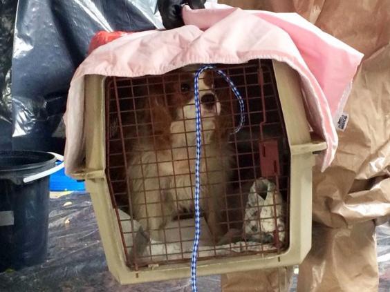 ebola-dog-1.jpg